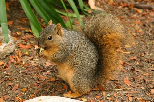 Lightmatter_wild_squirrel